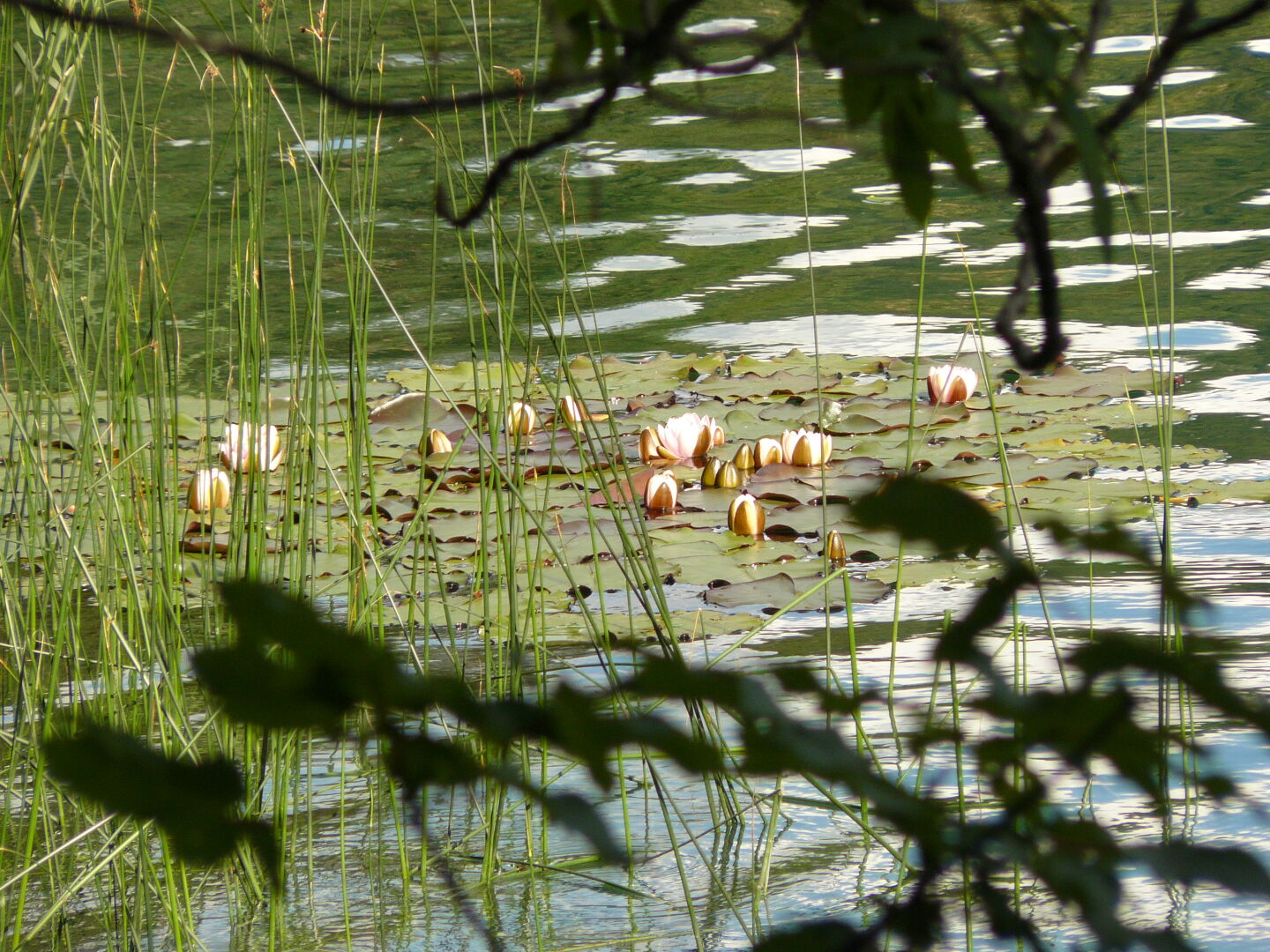 Waterlilies on Lake Alat, a small lake in the mountains that was very popular with locals and tourists for bathing.