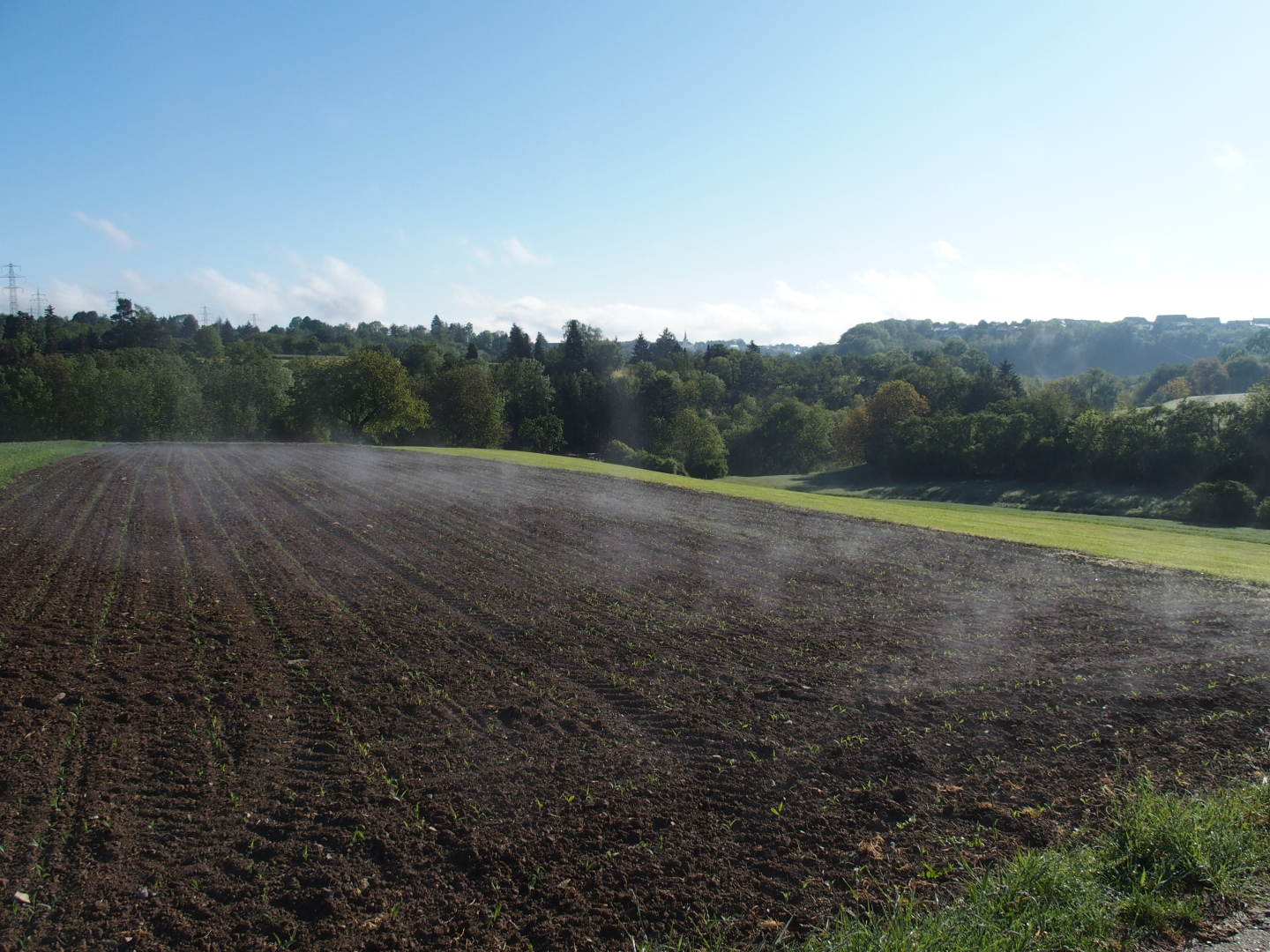 Thermals above a ploughed field (German: Ablösung), made visible by water vapour.