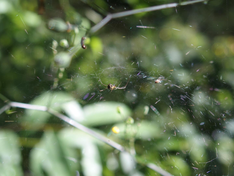 The sun makes the spiderwebs glisten...