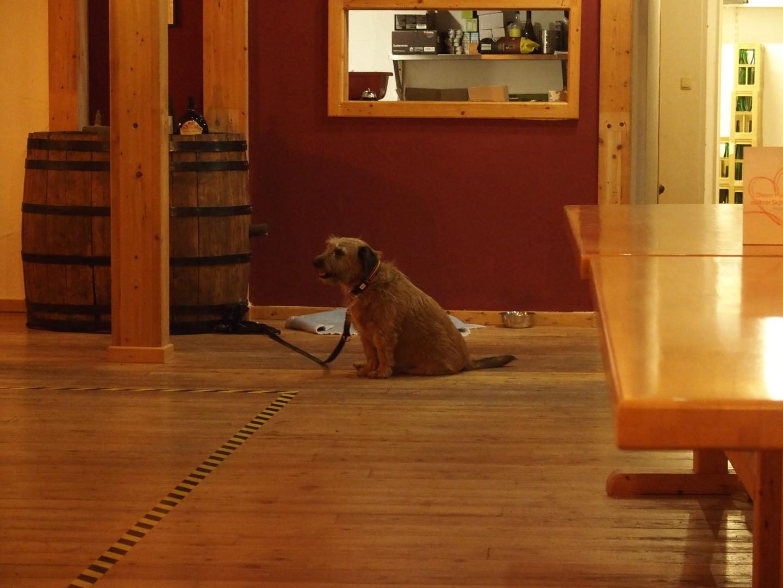 """Der nicht-beachtete Hund in der bier-freien Häckerwirtschaft """"Goldenes Fass"""" in Klingenberg."""